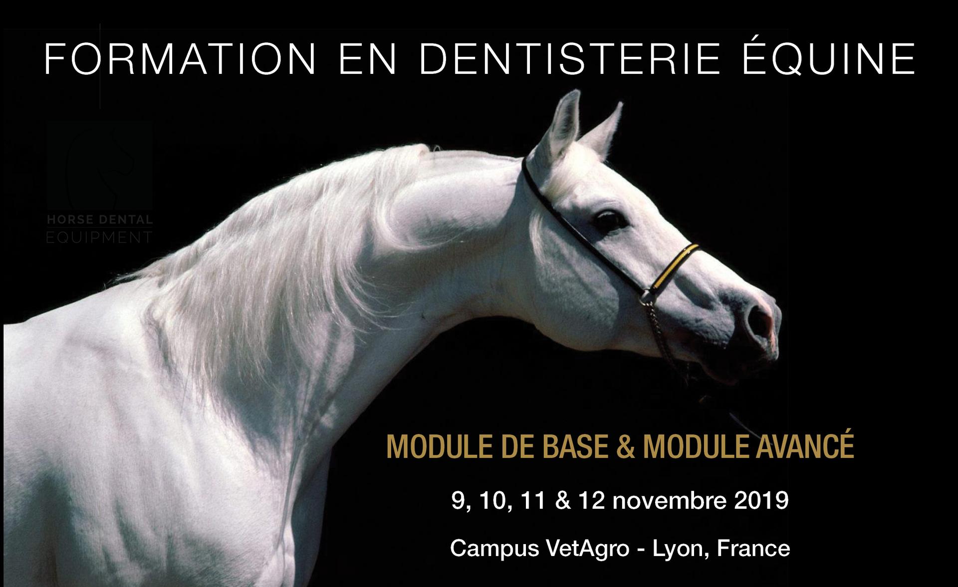Formation en dentisterie équine